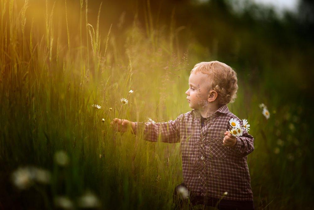 child, children, portrait, boy, nature, grass, meadow, flowers, sun, Milosz_G