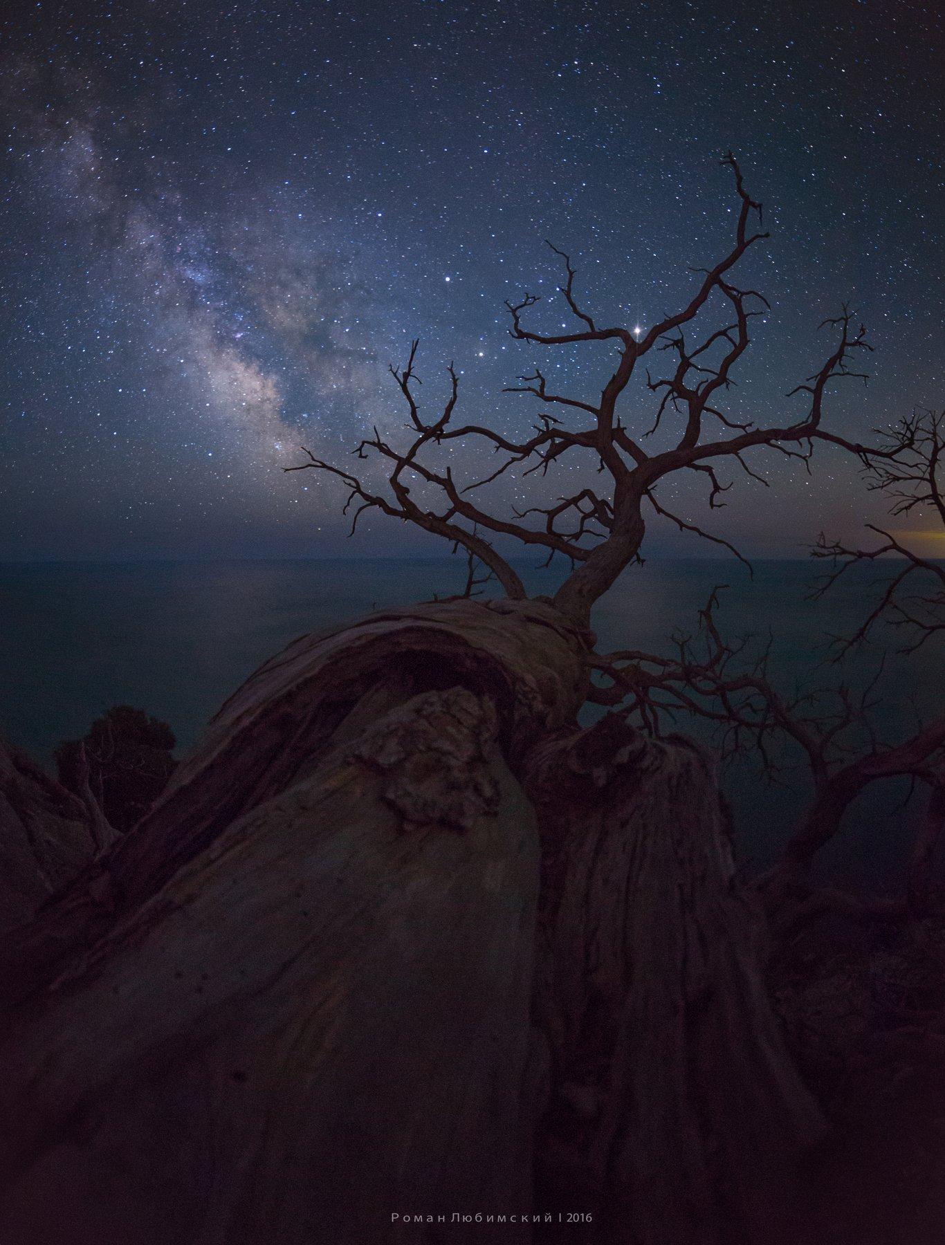 ночная фотография, крым, млечный путь, дерево, звезды, коряга, ночь, новый свет, красиво, пейзаж, природа, россия, Роман Любимский