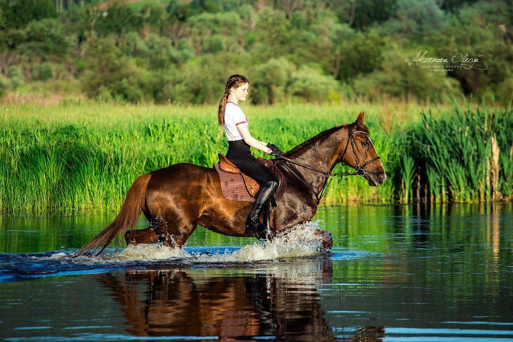 лошадь, закат, река, вода,красота, брызги, рысак, русский рысак, конная фотография, Аксёнова Олеся