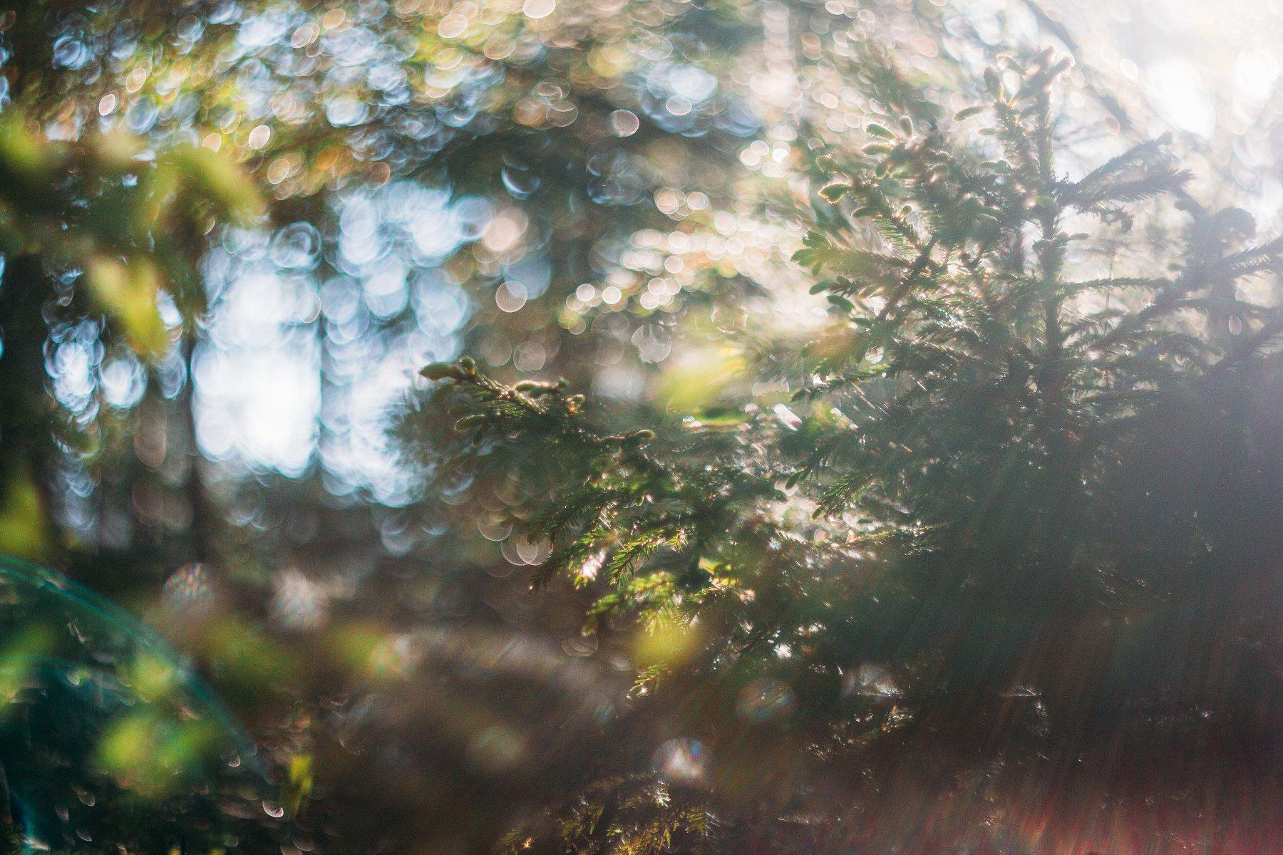 солнце, свет, лес, утро, боке, гелиос, Афиногенова Татьяна