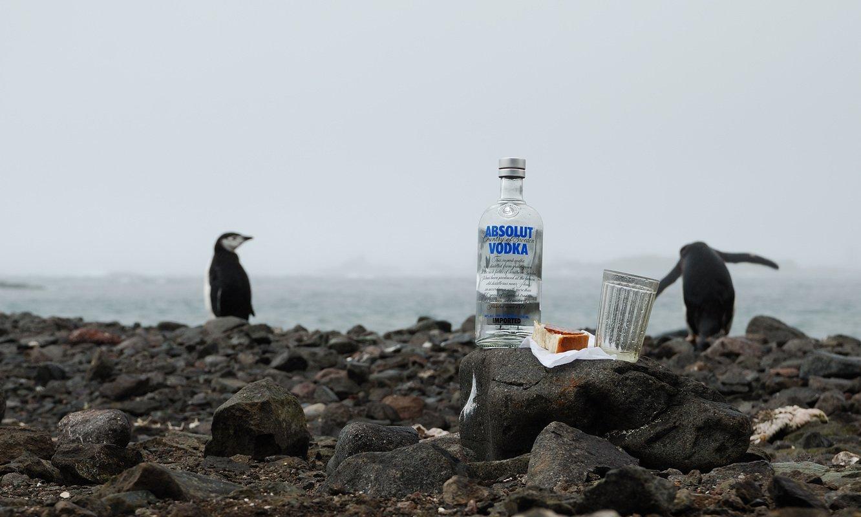 антарктика, пингвины, водка, стакан, Руслан Елисеев