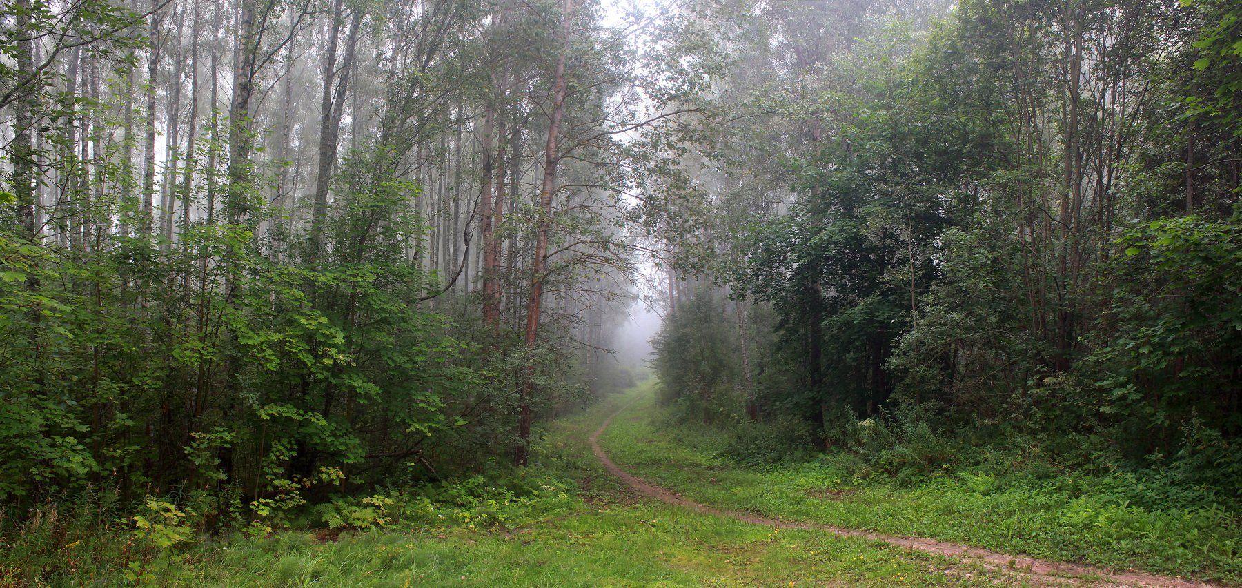 лес, туман, Свистков Александр