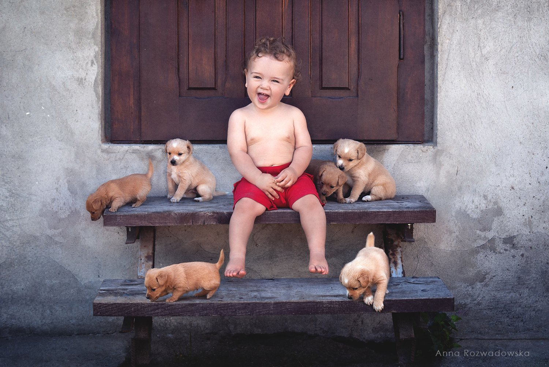 child, dogs, puppies, fun, AnnaRozwadowska