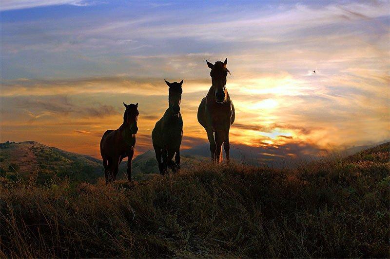 кони,закат, Юрий Март