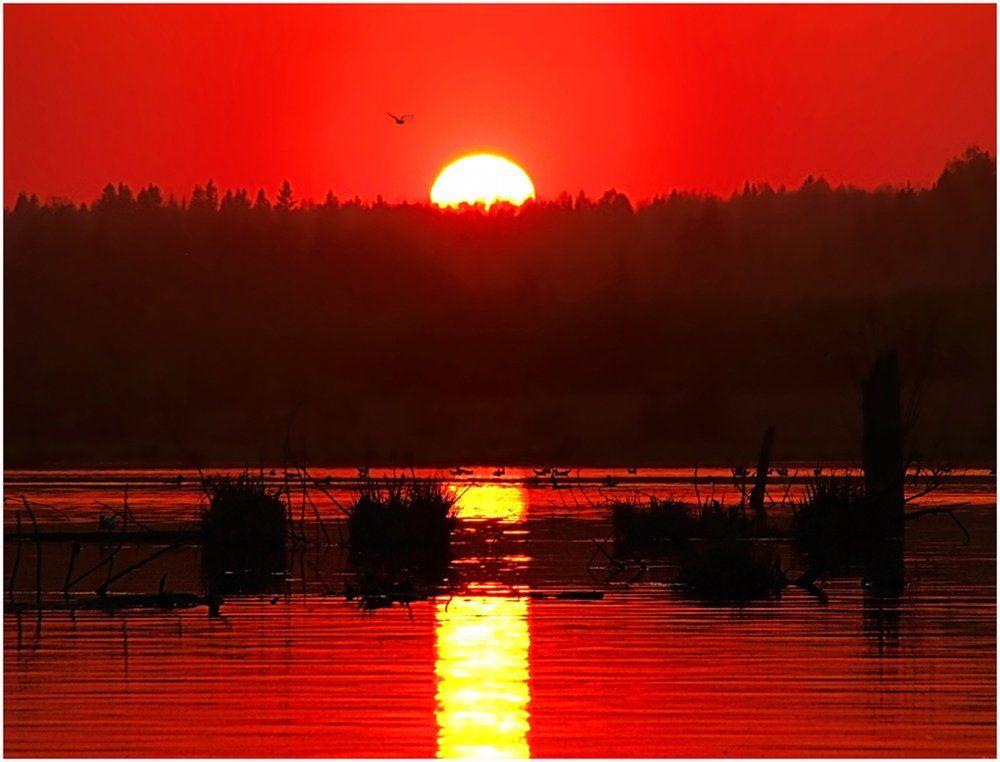 закат,небо,солнце,пейзаж,удмуртия,пруд, Андрей,любитель 35photo