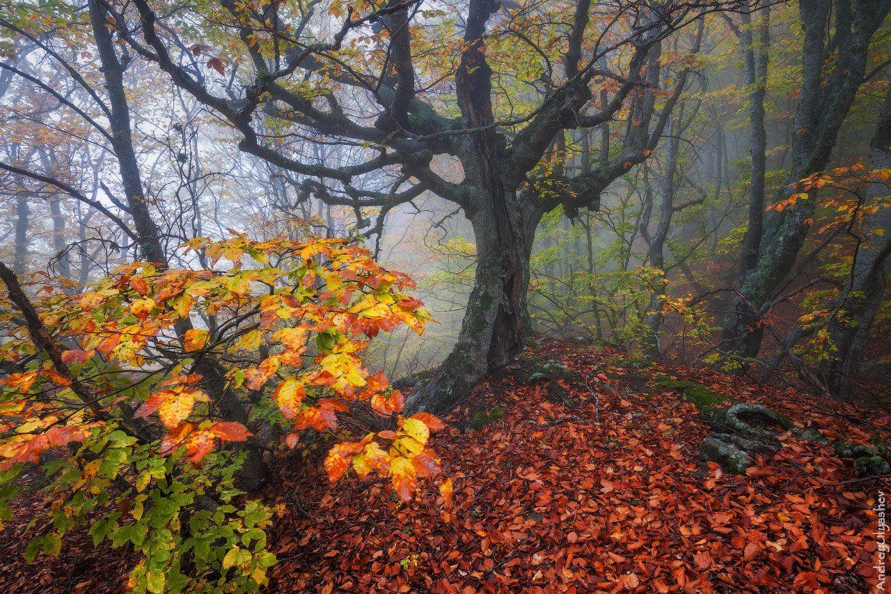 крым демерджи осень лес туман, Андрей Уляшев