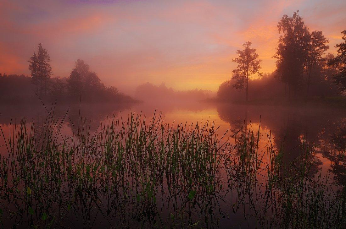 morning, sunrise, mist, lake, reflections, summer, Justinas Kondrotas