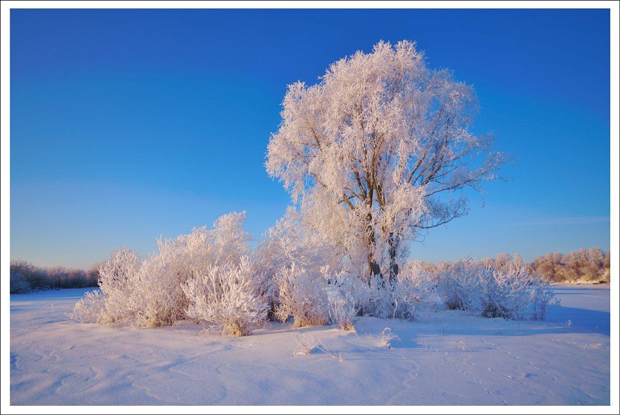 утро зима иней мороз, Купреев Юрий