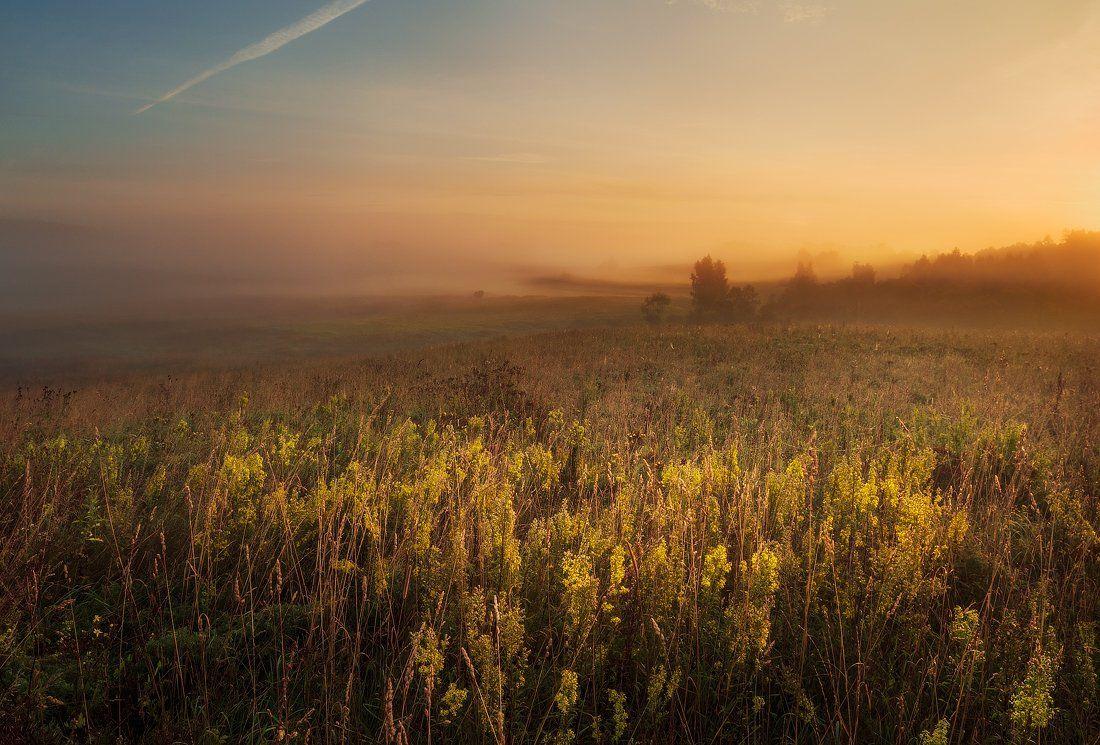 morning, sunrise, mist,  summer, fog, trees,  clouds, colours, meadow, blossom, hills, valley, Justinas Kondrotas