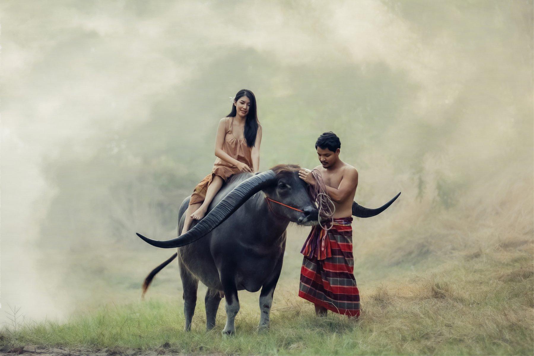 love, buffalo,couple,thai,thailand, ADIREK M