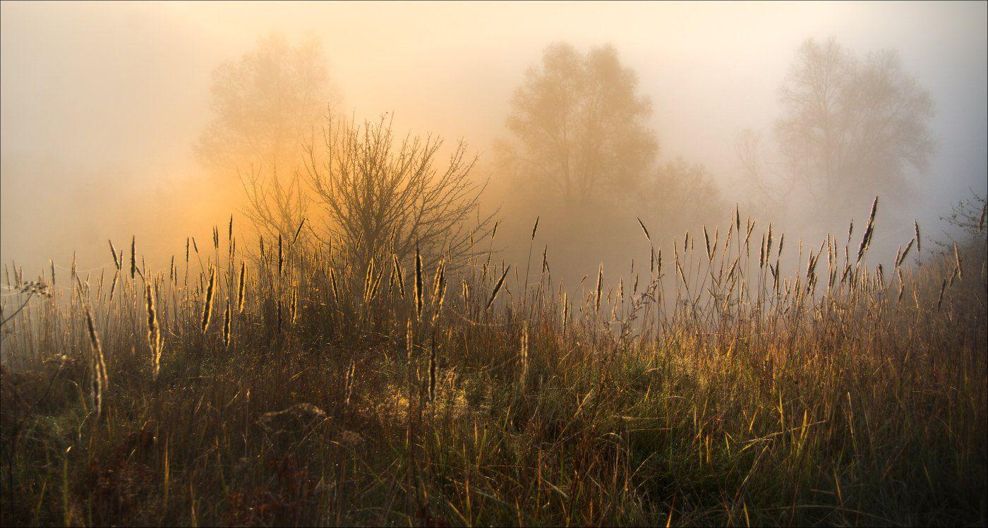 осень, туман, утро, солнце, Купреев Юрий