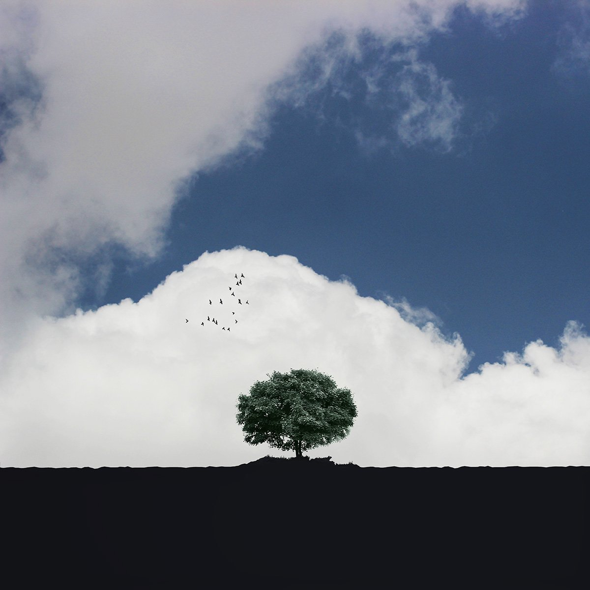 creative, fineart, conceptual, tree, gree, birds, landscape, blue, minimal, , Milad Safabakhsh