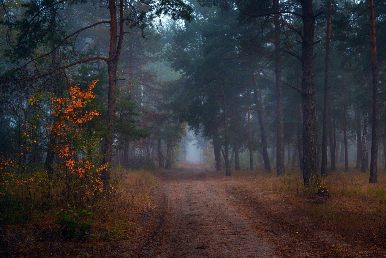 лес, осень, тропа, туман, Галанзовская Оксана