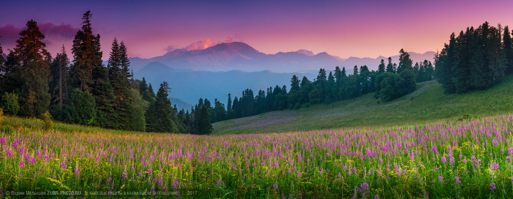 кипрей, иван-чай, кавказ, природа, пейзаж, панорама, лето, цветы, горы, поляна, заповедник, Вадим ZUBR Малышев