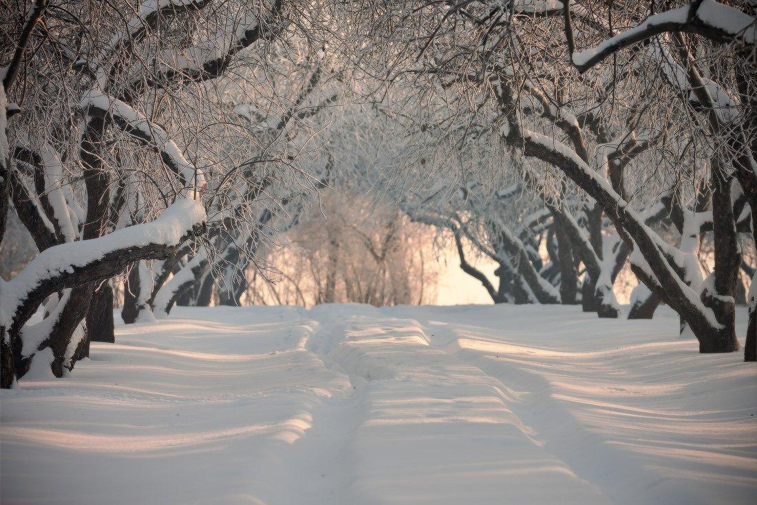 зима, москва, коломенское, дорога, locus