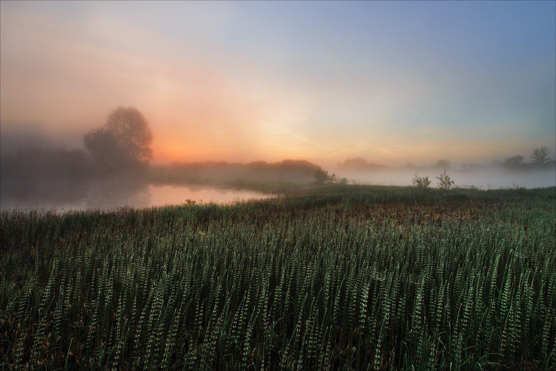 утро туман река днепр, Купреев Юрий