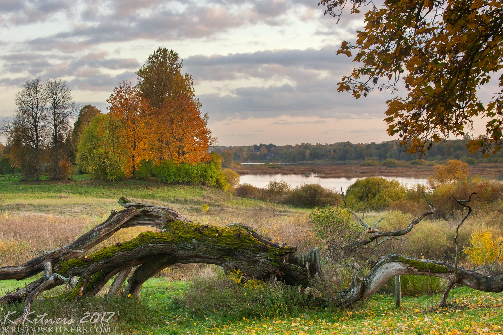 river branch grass field bush autumn tree leaf fevening sky clouds, Kristaps Kitners