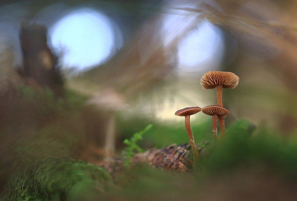 гриб, шишка, семья, красный, оранжевый, красивый, дерево, мох, деревья, растения, природа, осень, фон, зеленый, коричневый, красиво, листва, облачно., Виктор Шнайдер