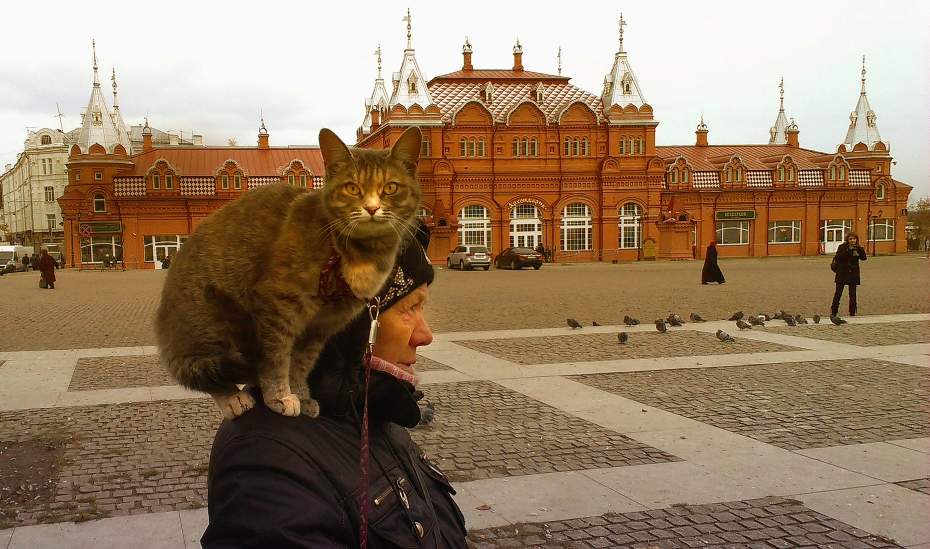 кот, Maria V. Gorskaya