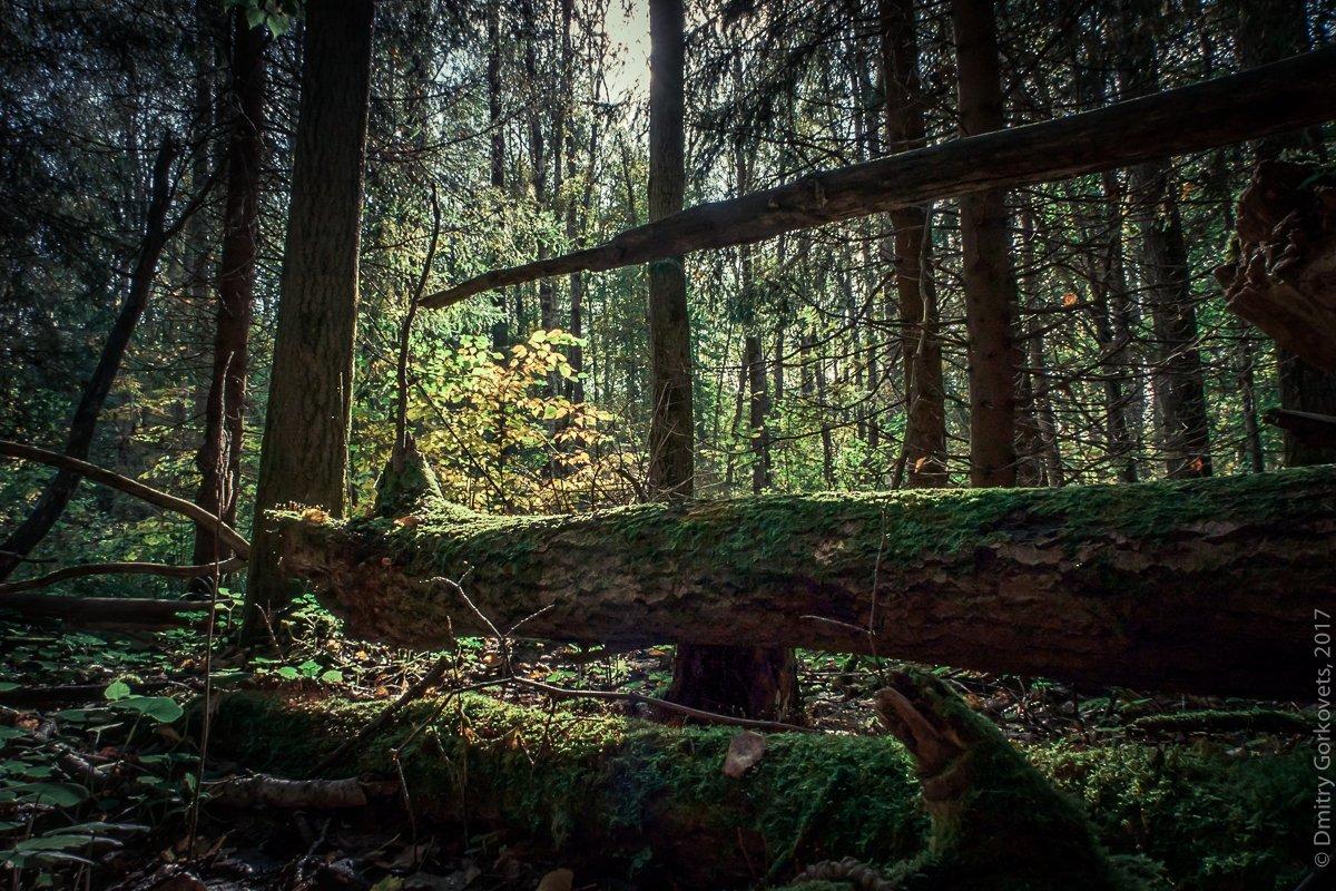 #landscapes #color #forest #trees #PhotoByDmitryGorkovets, Горковец Дмитрий