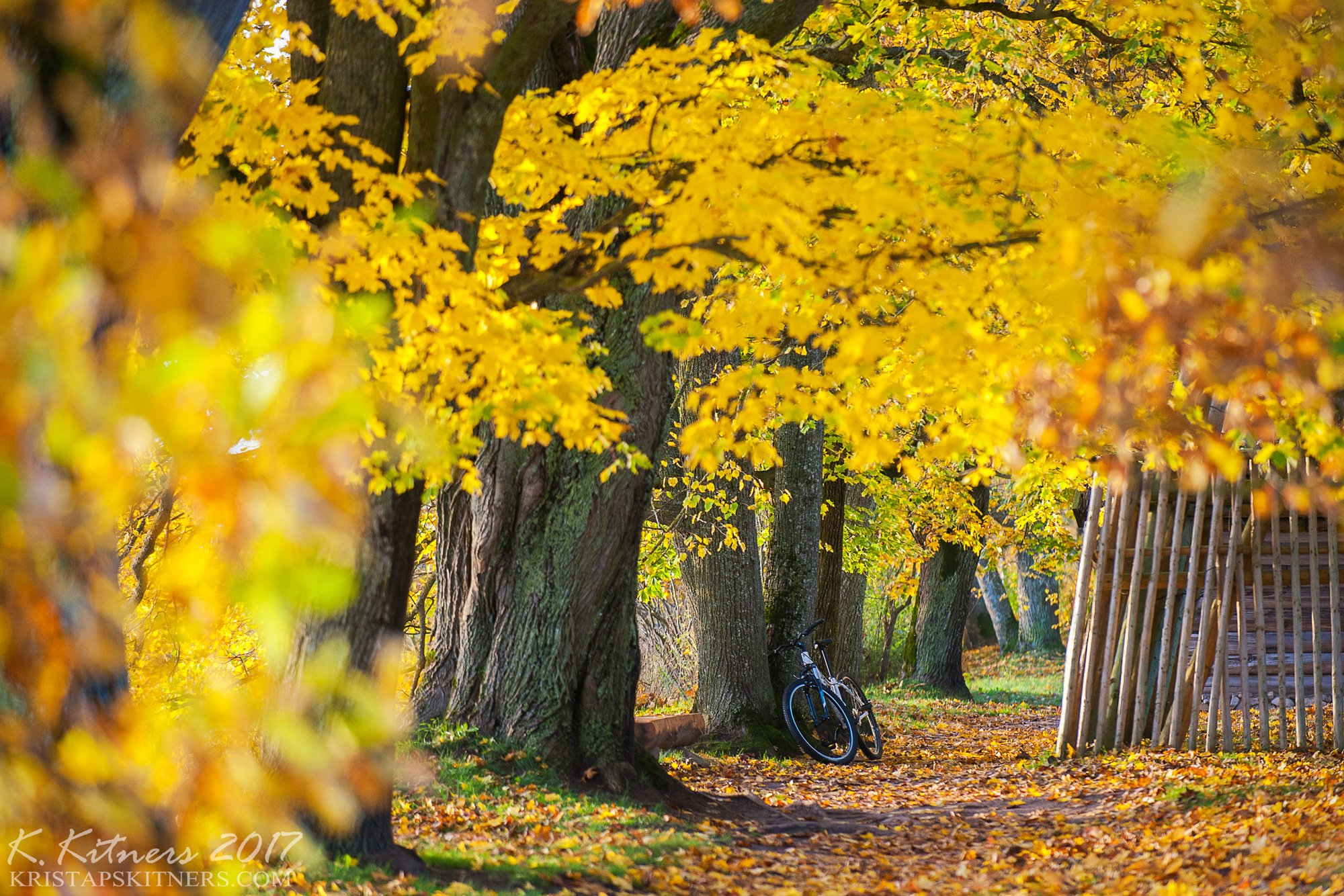 branch grass bush autumn trees leaves road park yellow bicycle countryside light, Kristaps Kitners