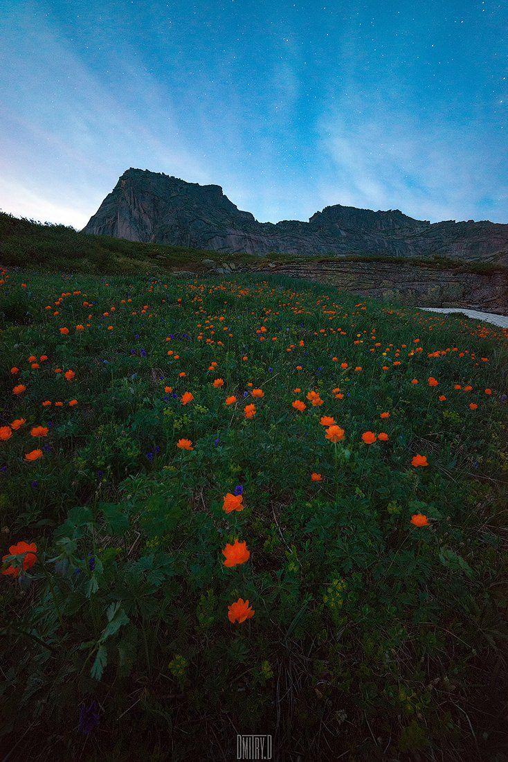ергаки, пейзаж, горы,ночь, звезды, цветы, россия,, Дмитрий Доронин