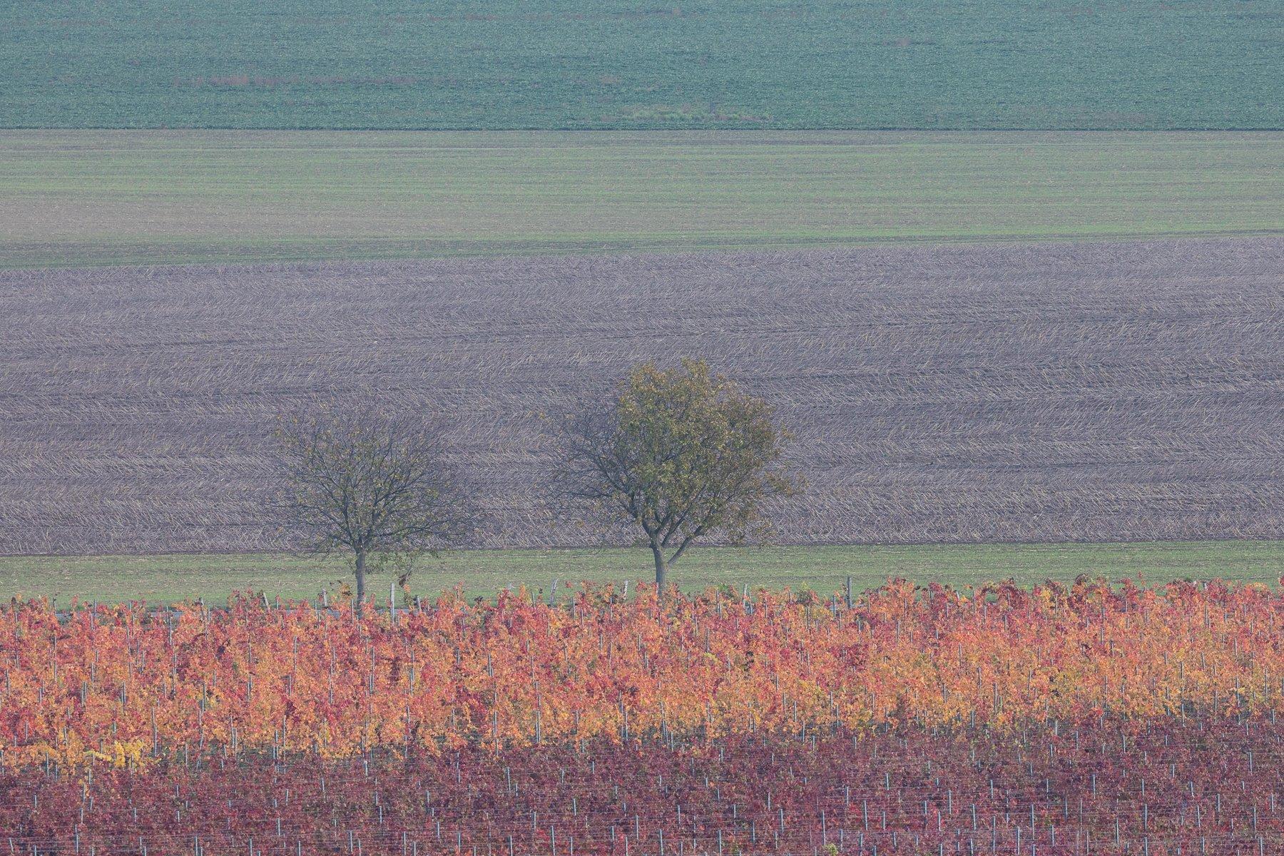 южная моравия, виноград, осень, Marina Malikova