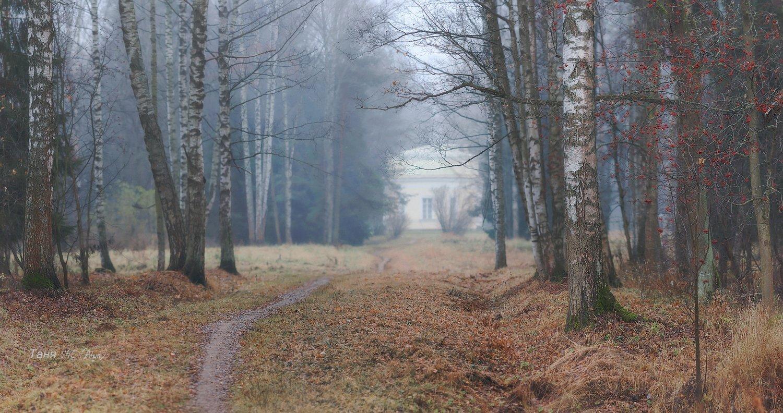питер, павловск, павловский, осень, пейзаж, туман, павловскийпарк, Таня She (Aiya)