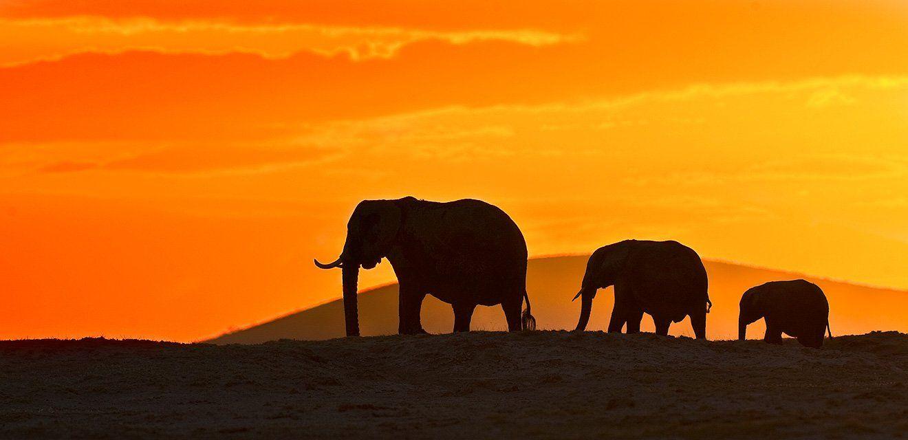 слоны, Сергей Иванов