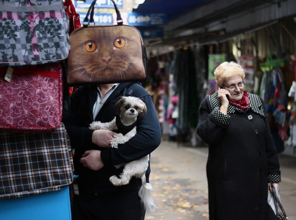 собака, кот, животные, сумка, рынок, Rita Gadar