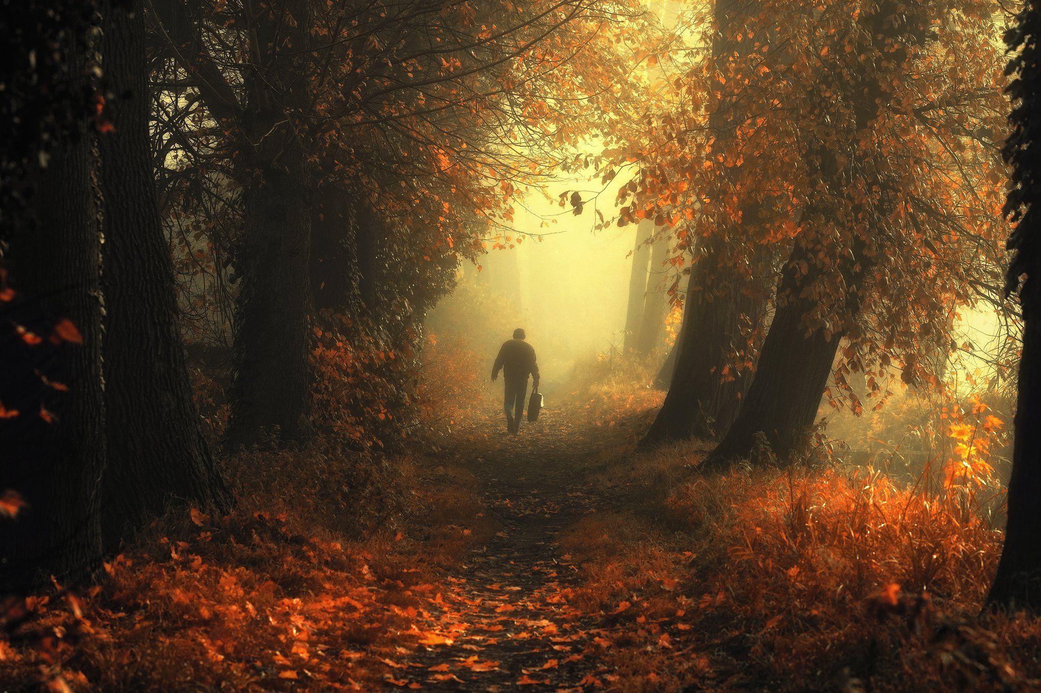 блестящая осень и странник autumn alley trees magic mist foggy path light, Radoslaw Dranikowski