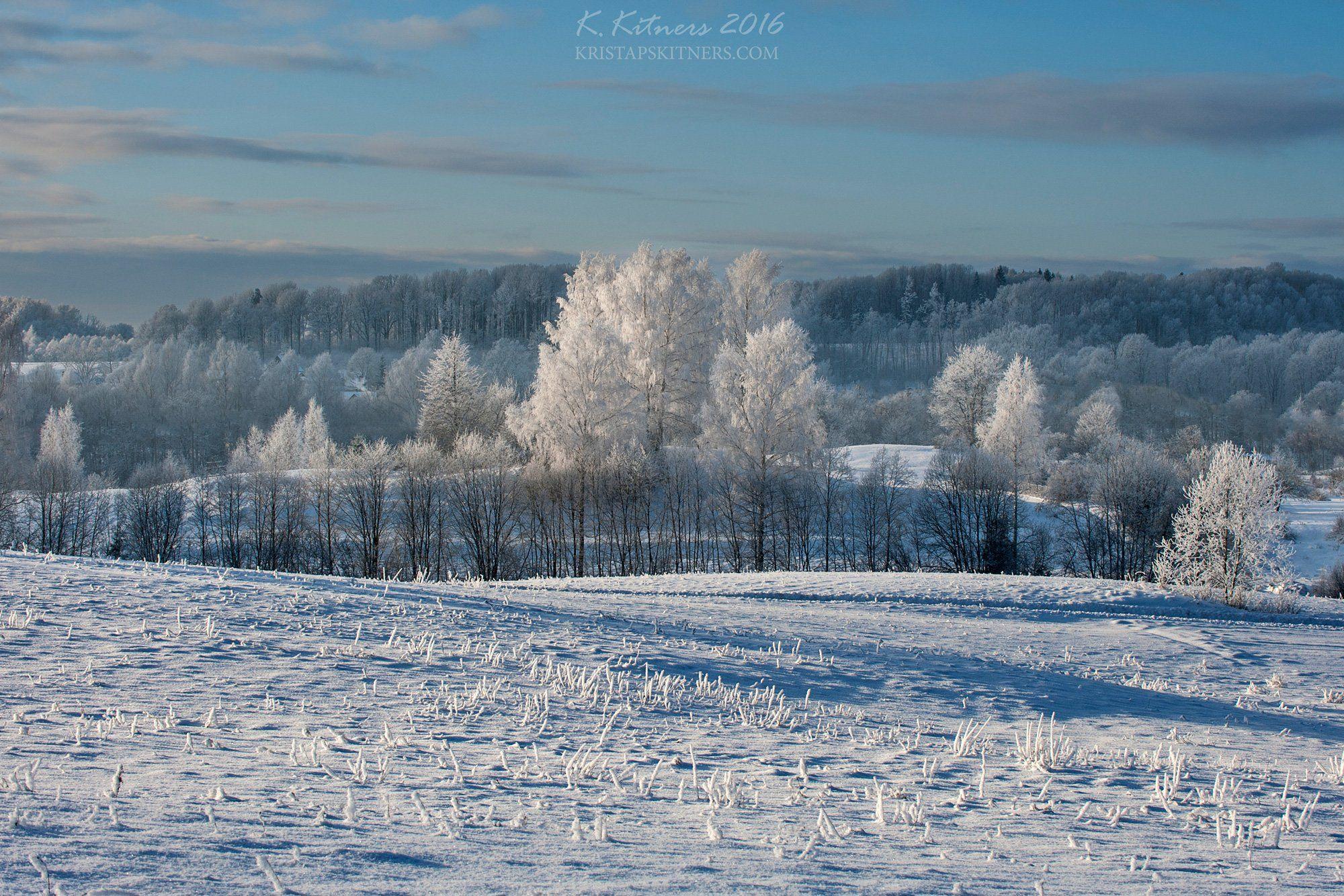 snow frost forest tree blue white winter sky clouds latvia landscape field sun day light cold, Kristaps Kitners