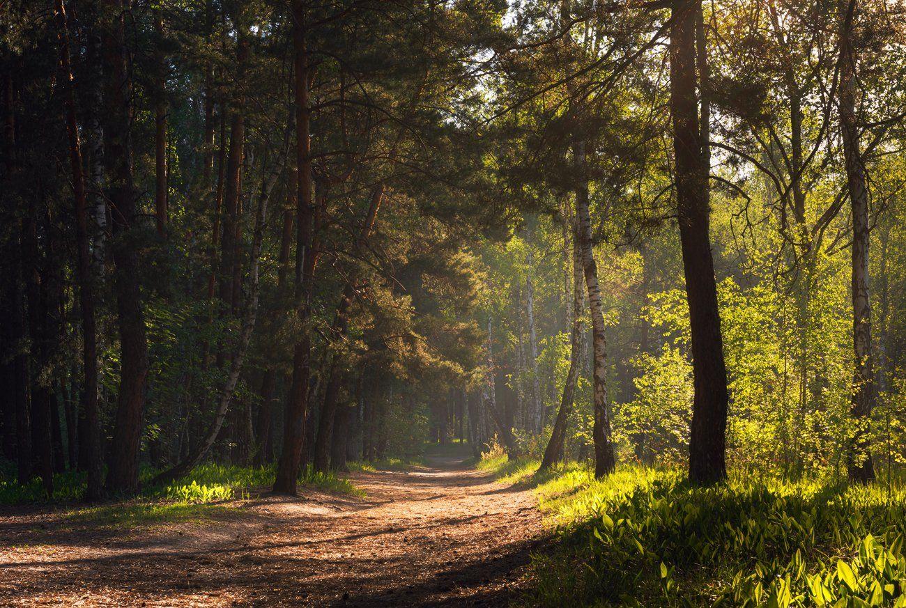 лес, весна, май, утро, ландыши, Галанзовская Оксана