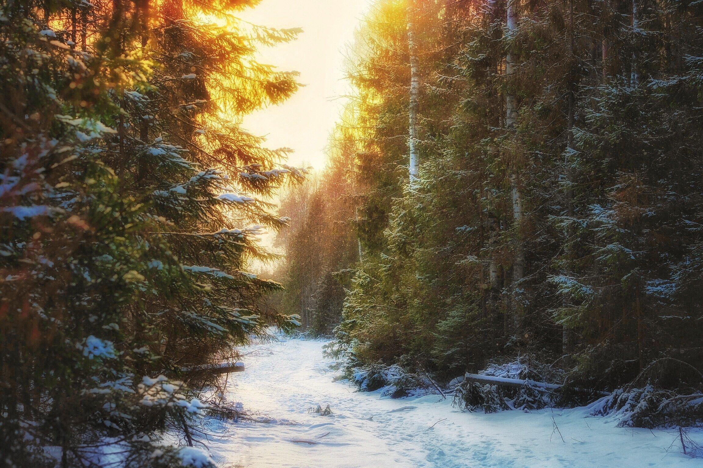 природа, пейзаж, лес, зима, Екатерина