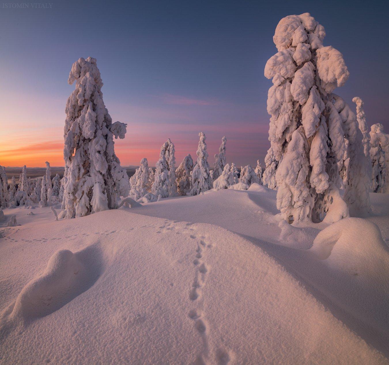 пейзаж,россия,кандалакша,залив,снег,зима,цвет,ночь,цвет,закат, Истомин Виталий