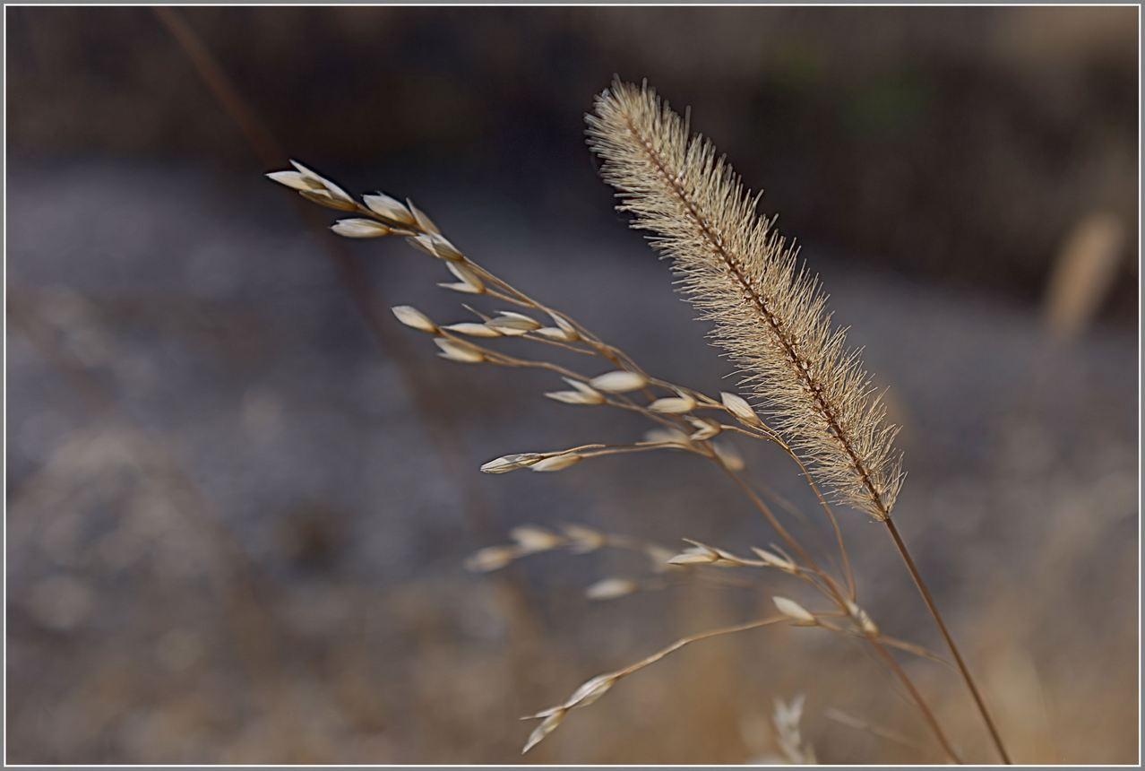 природа, Геннадий Меремьянин
