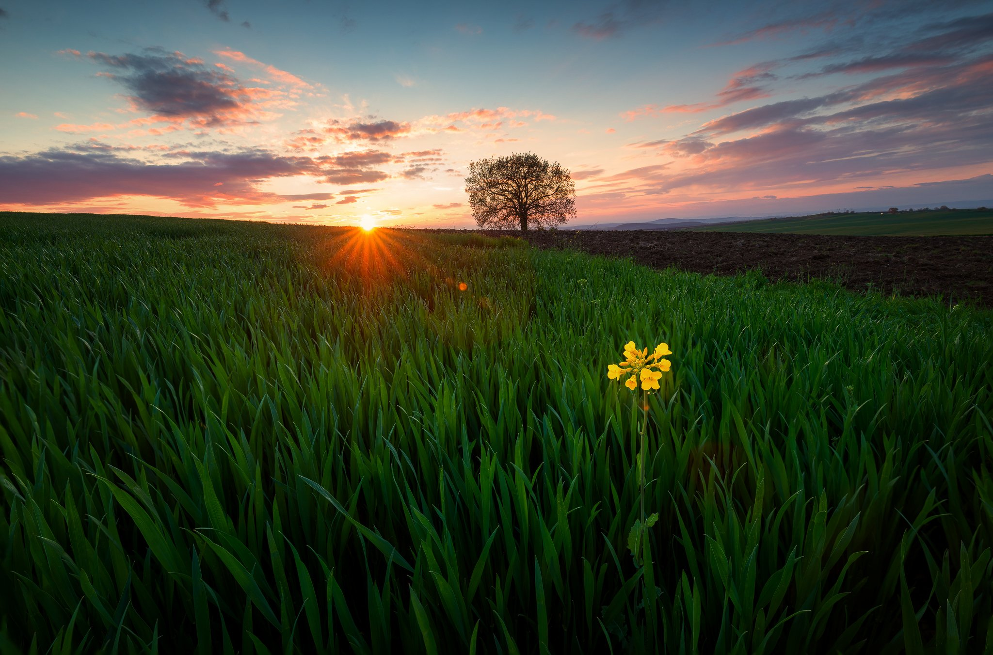 agronomy, blooming, cloud, clouds, colorful, daisy flower, dandelions, dusk, ecology, garden, green field, green fields, green grass, green mountains, greenery, health, idyllic, isolated, leafy, lonely flower, lonely tree, meadow flowers, oak, outdoor, ou, Иван Димов