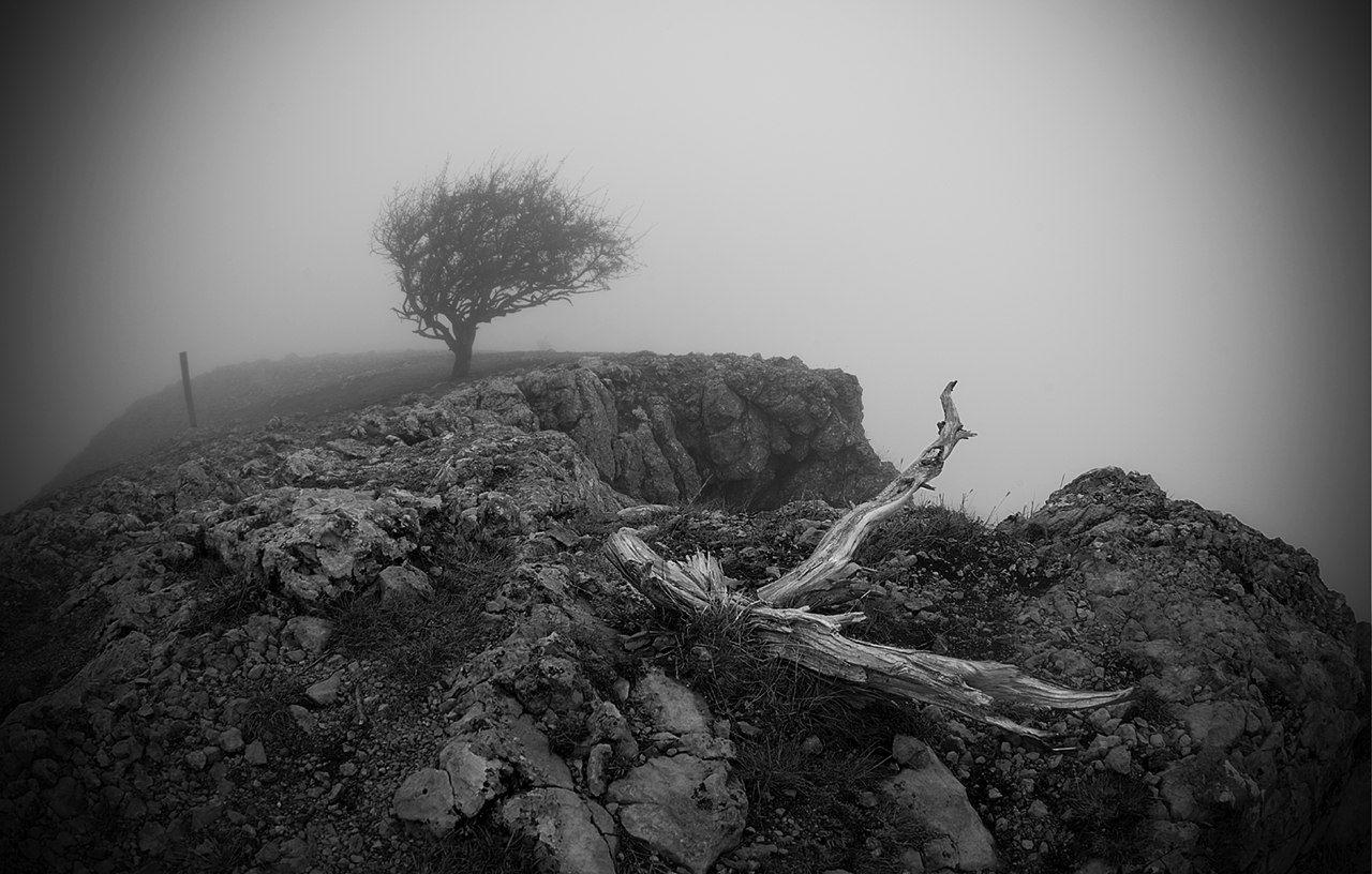 пейзаж, дерево, туман, обрыв, Макс