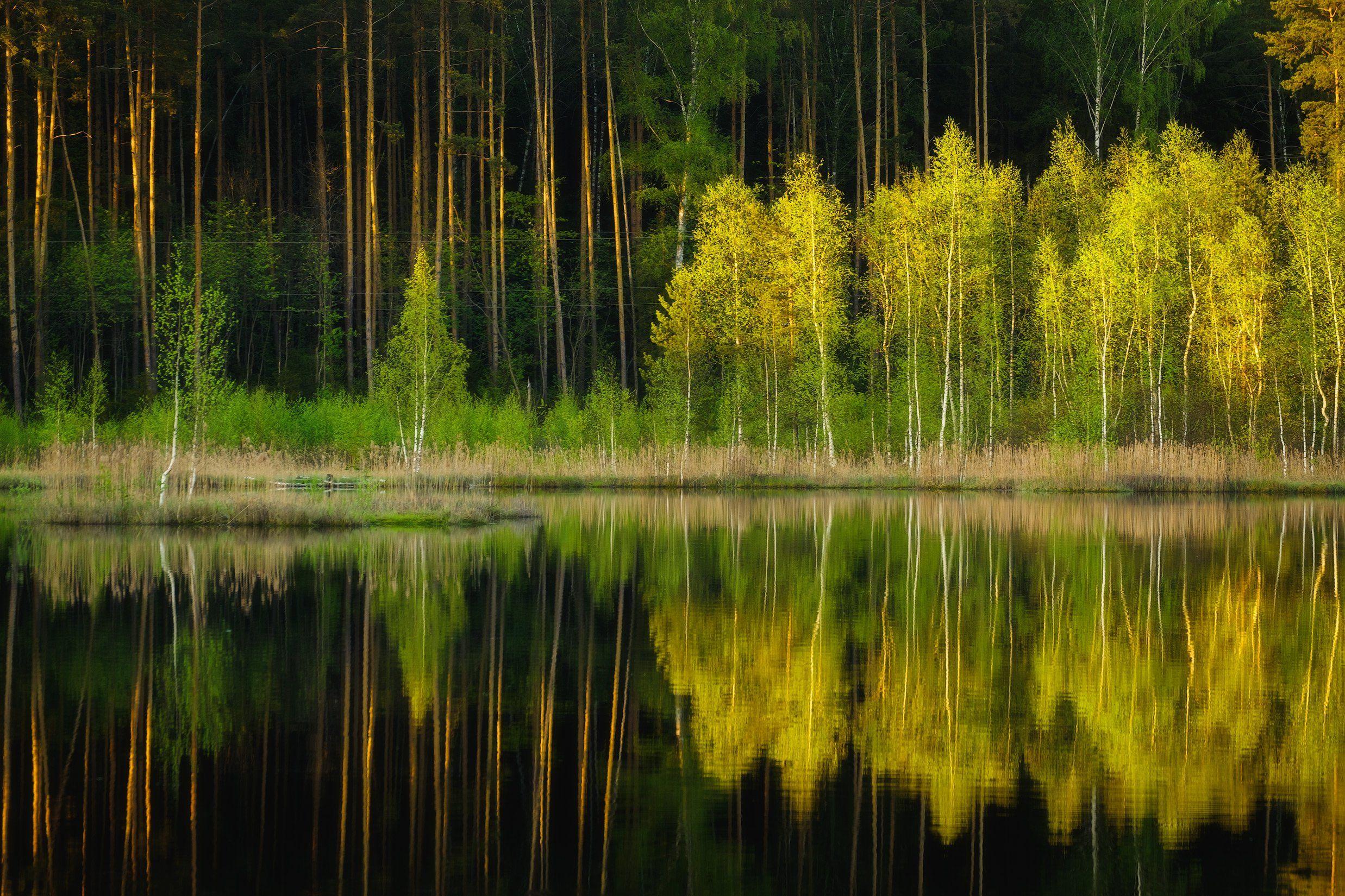 россия, московская область, щепкино болото, болото, закат, отражение, сумерки, лес, весна, пруд, пейзаж, природайзаж, природа, Оборотов Алексей