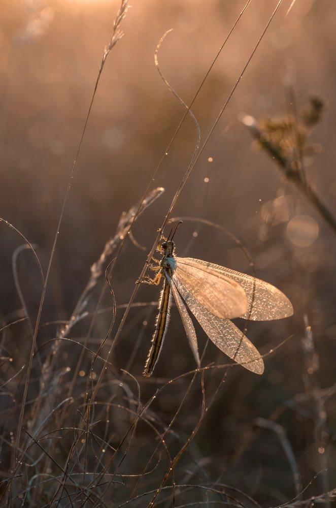 макро, рассвет, муравьиный лев, Анна Иванова