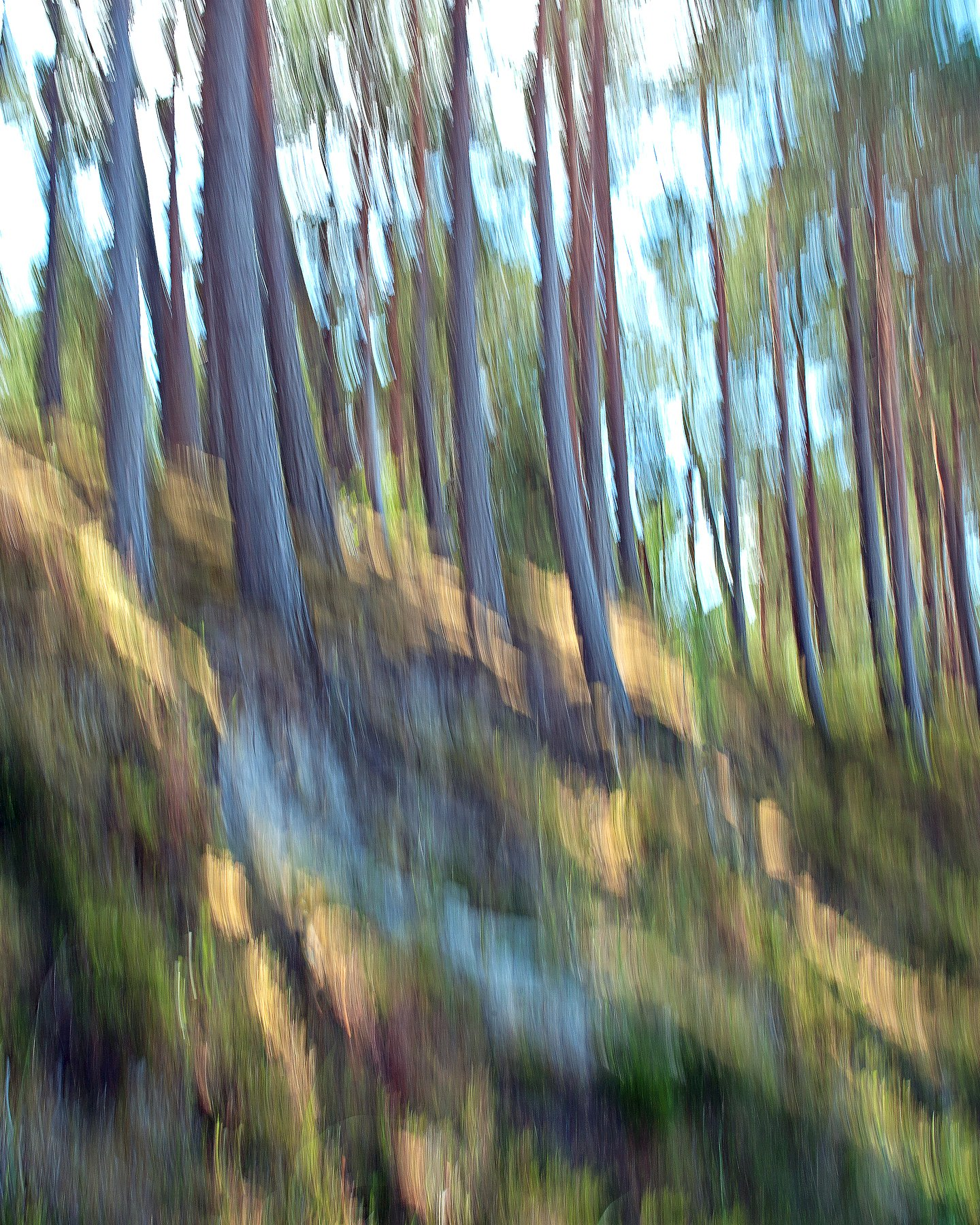 естественное фото, хорошая фотография; nature photo, good photo, studio photo, Juris Zēbergs