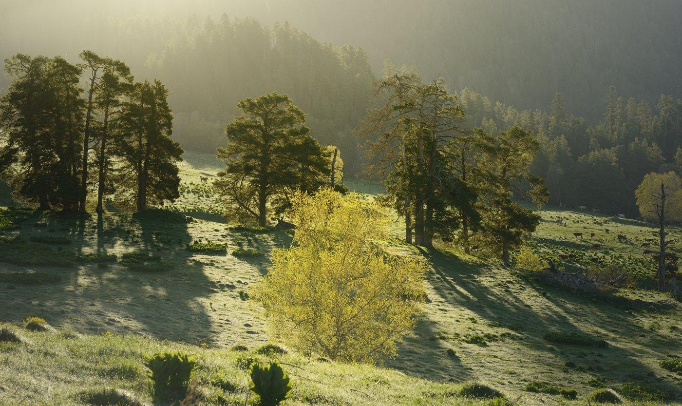 горы весна кавказ архыз рассвет, Александр Жарников