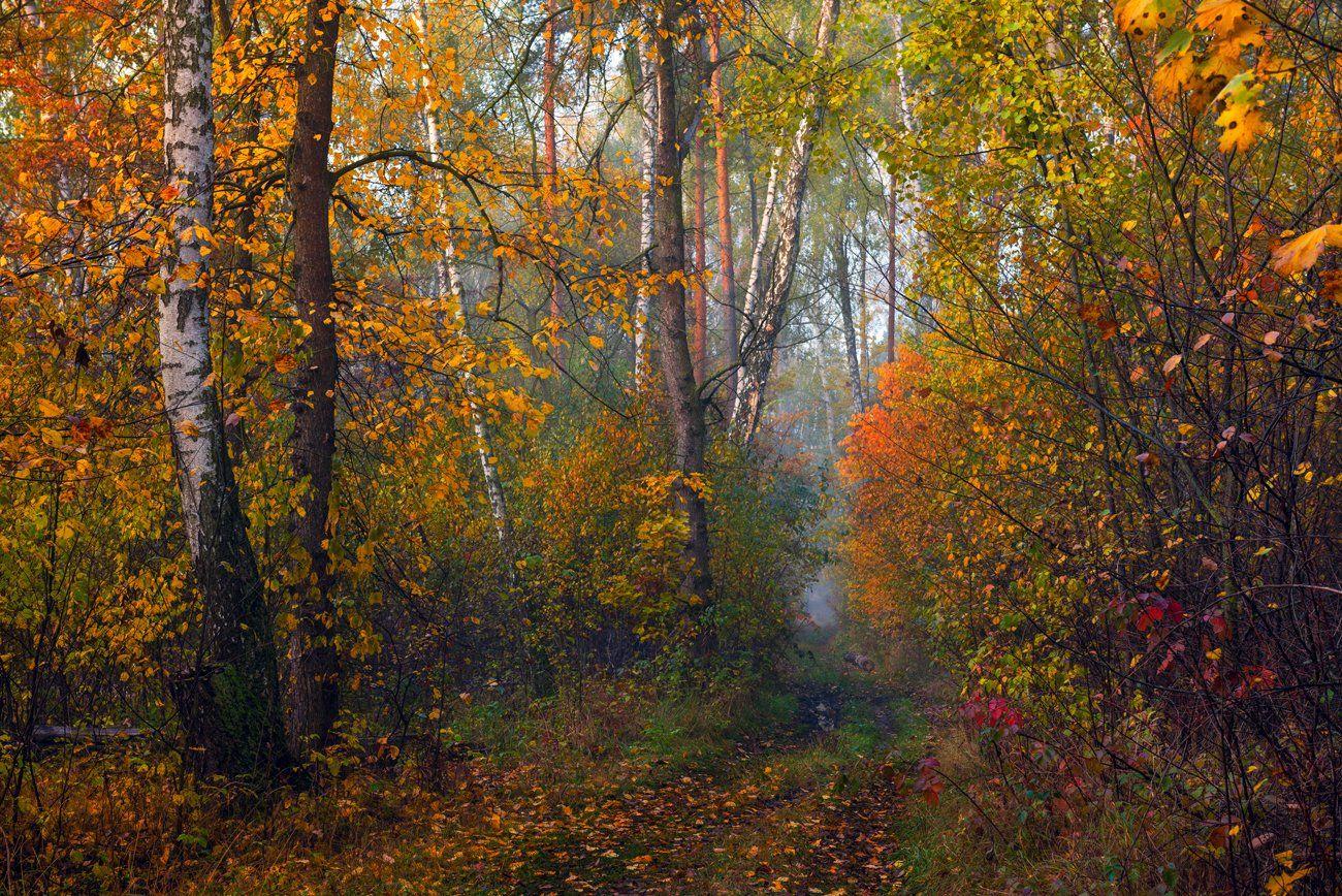 лес, осень, ноябрь, туман, сырость, Галанзовская Оксана