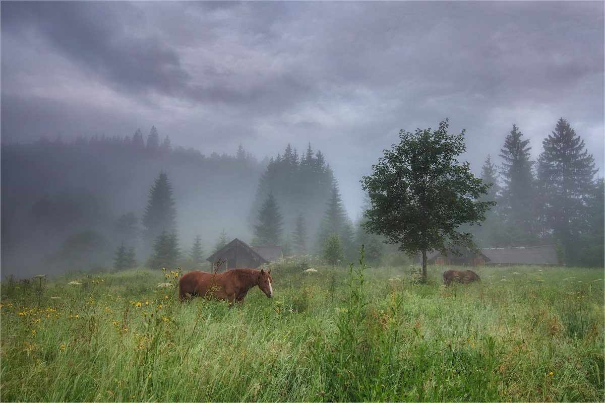 horses, morning, fog, carpathian mountains, Игорь Марценюк