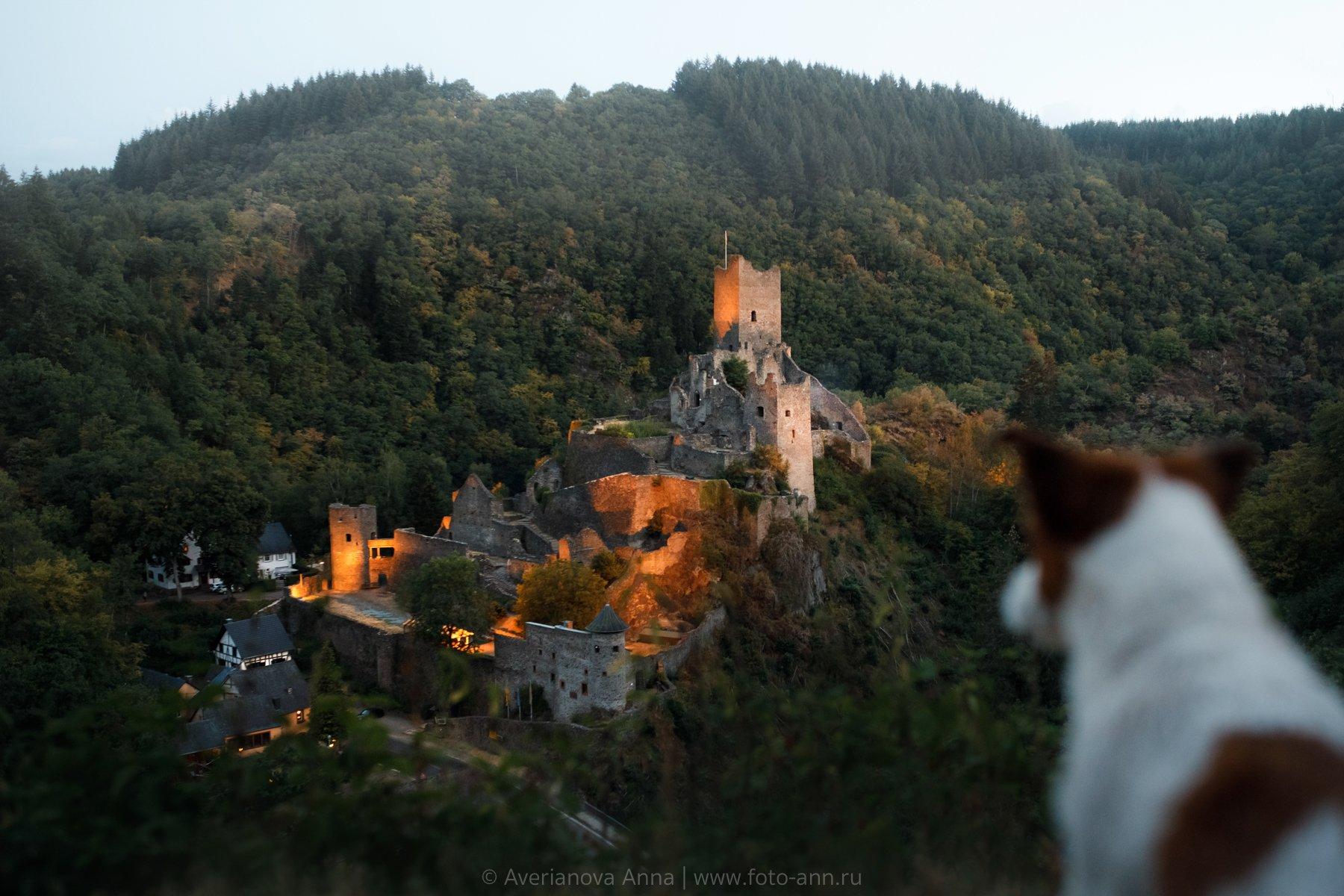 собака, замок, город, Анна Аверьянова