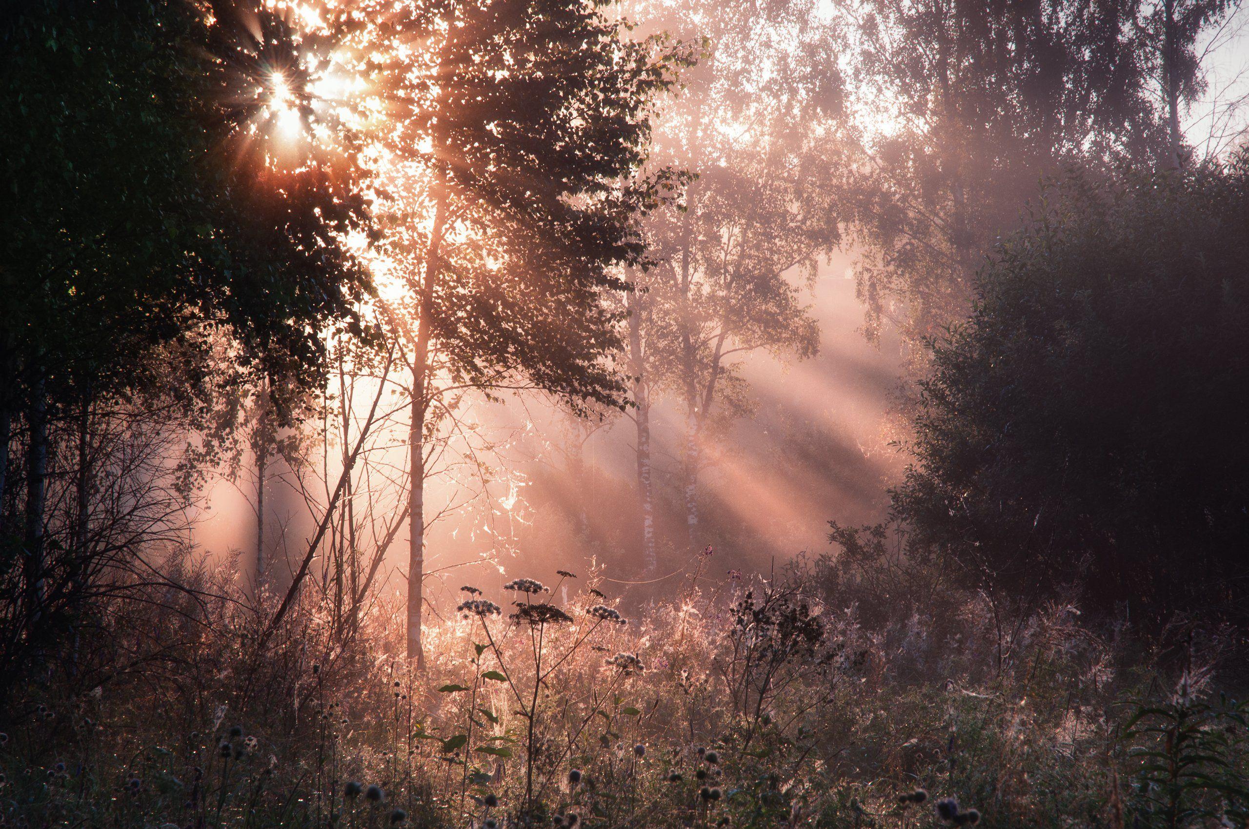 природа, рассвет, туман, солнце, туман, пейзаж, nature, dawn, fog, sun, fog, landscape, Алексей Сергованцев