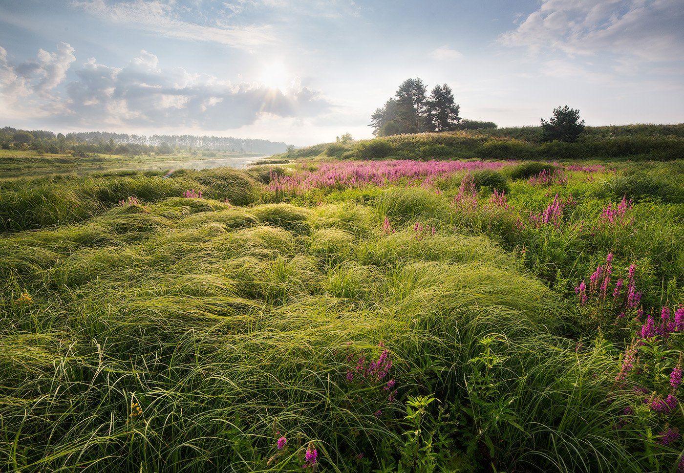 landsacpe, morning, grass, sky, утро, пейзаж, Голубев Дмитрий