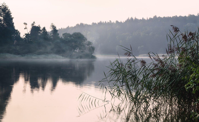 лето, рассвет, река, туман,, Сергей Шабуневич