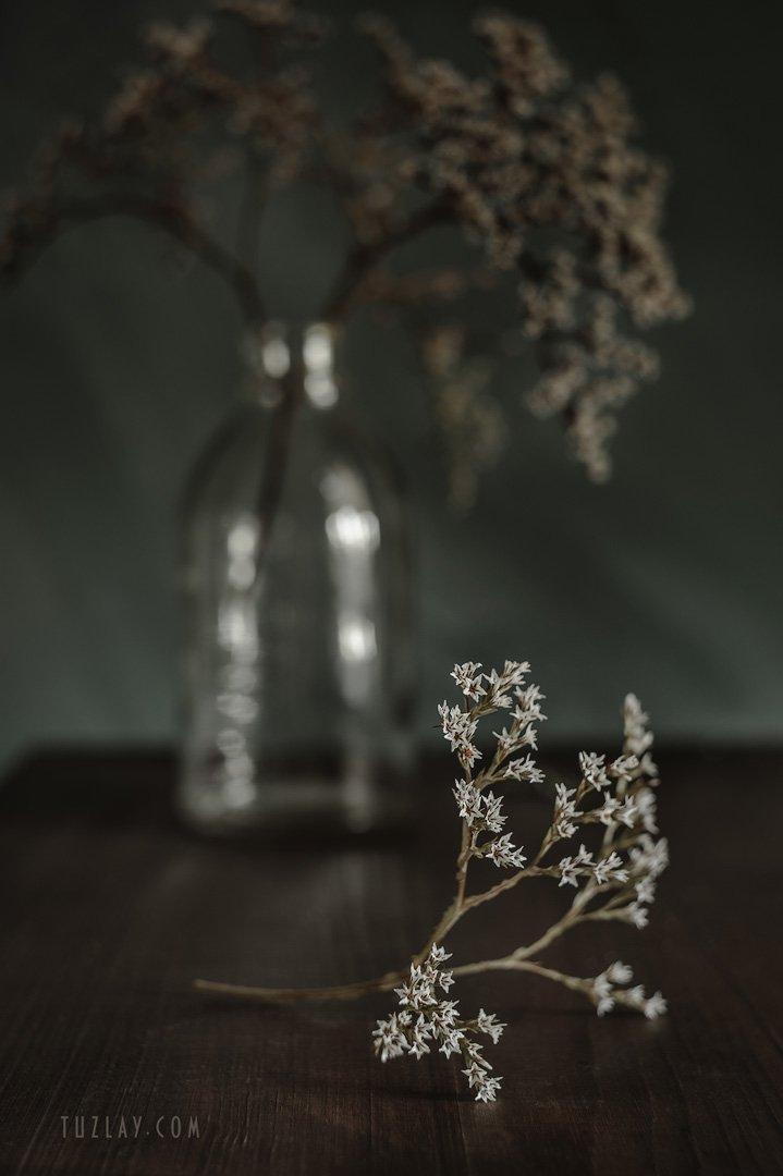 углостебельник, цветы-звёздочки, гелиос 44-2, Владимир Тузлай