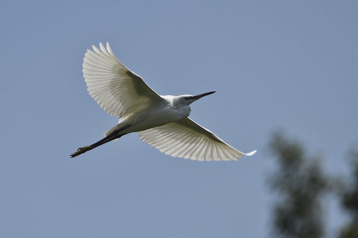 птицы birds, Jaroslav Mego